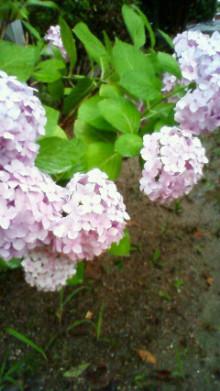 守口市少年少女合唱団 指導者のブログ-201006261848000.jpg